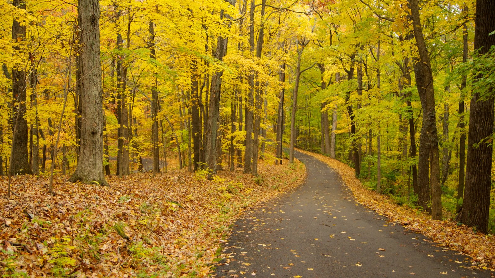 Edwin and Percy Warner Parks ofreciendo un parque, bosques y hojas de otoño