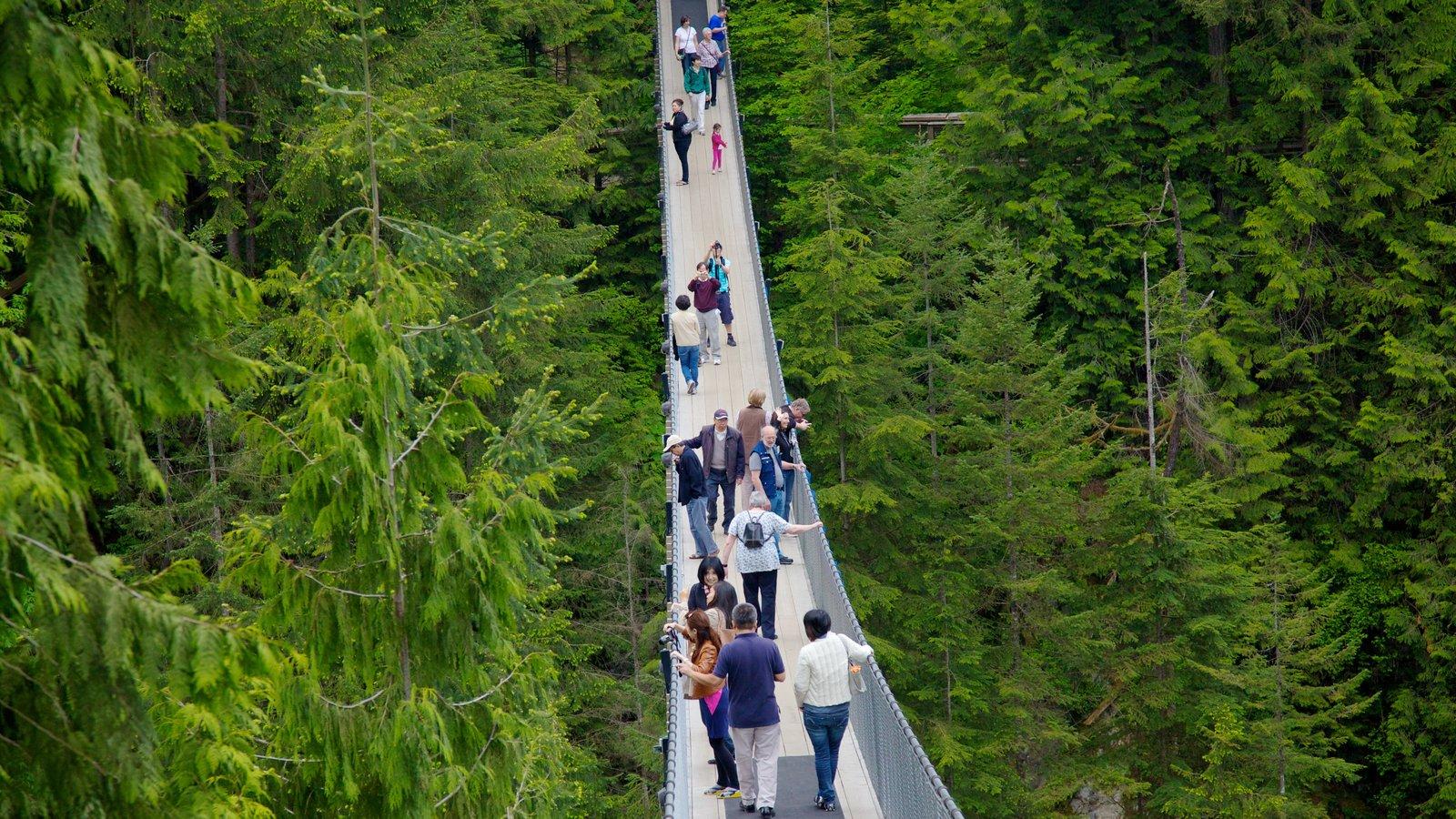 Capilano Suspension Bridge featuring views, a suspension bridge or treetop walkway and forests