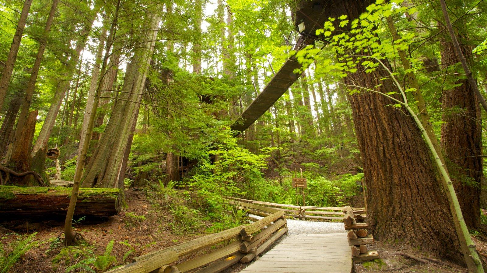 Capilano Suspension Bridge showing landscape views, a park and forest scenes