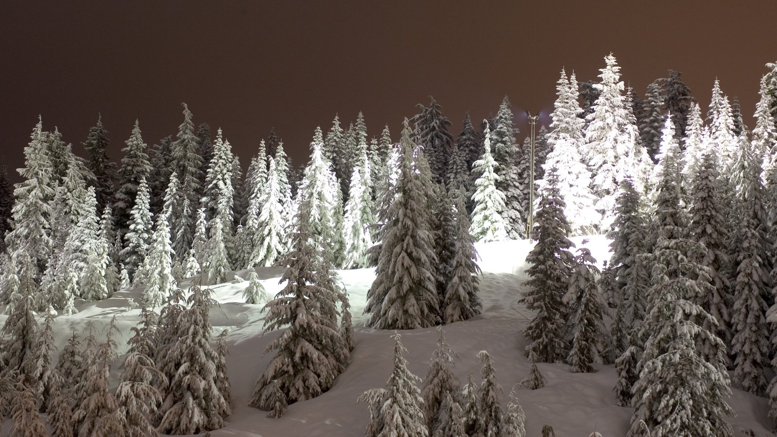 Cypress Mountain mostrando escenas nocturnas, bosques y nieve