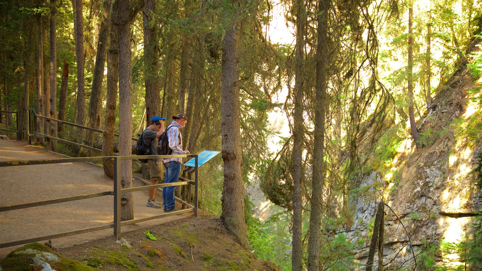 Johnston Canyon featuring forests and tranquil scenes as well as a small group of people