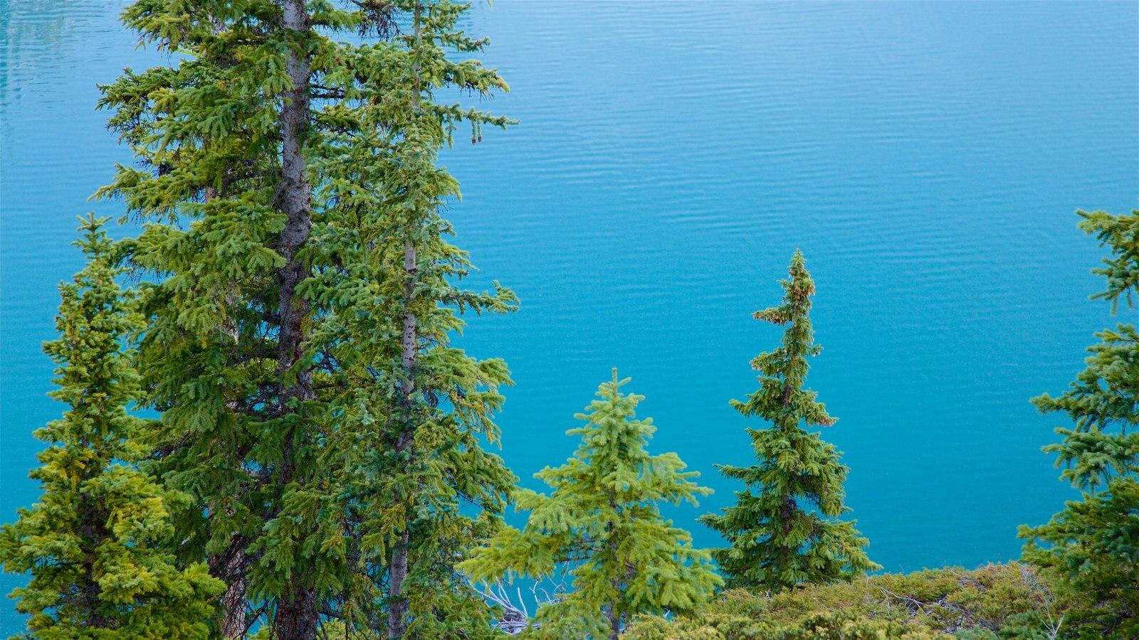 Lago Moraine mostrando um lago ou charco