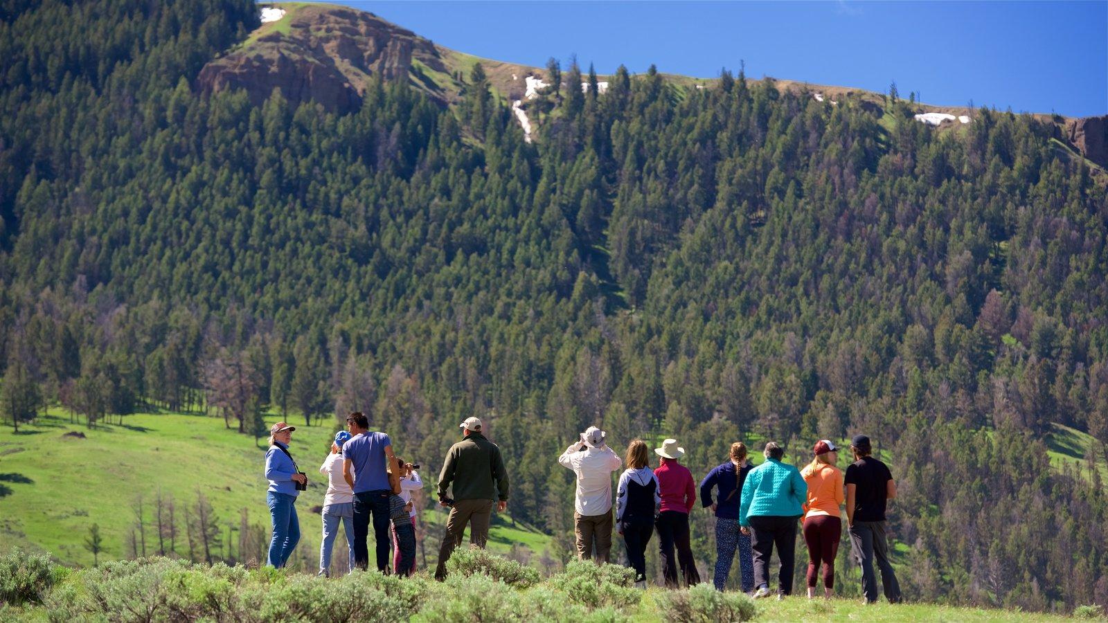 Yellowstone National Park caracterizando cenas tranquilas assim como um pequeno grupo de pessoas