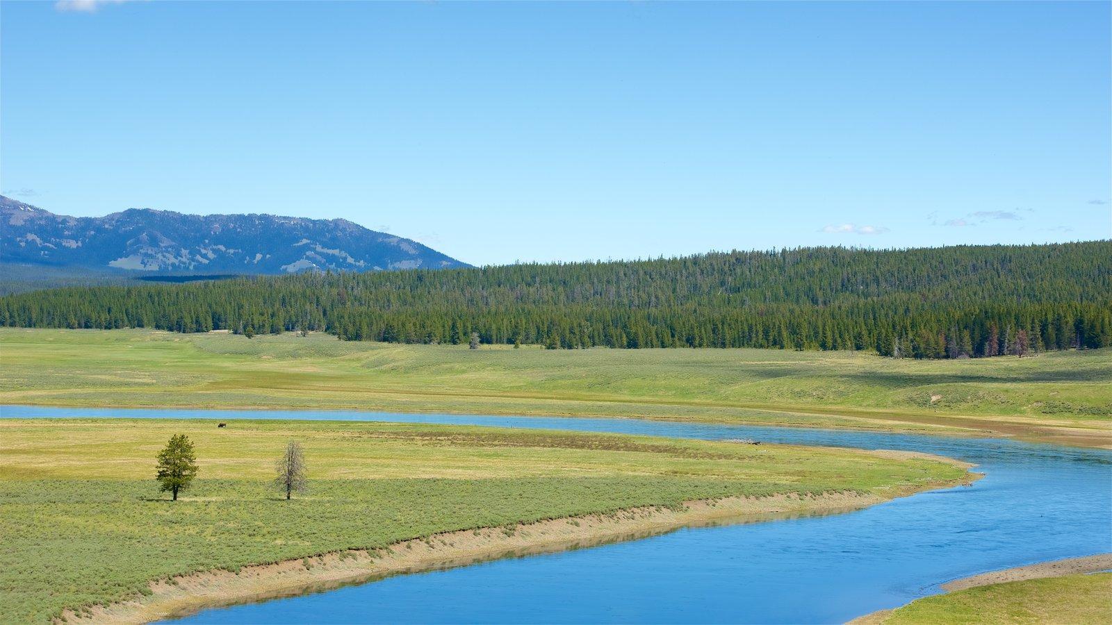 Yellowstone National Park mostrando um rio ou córrego e cenas tranquilas