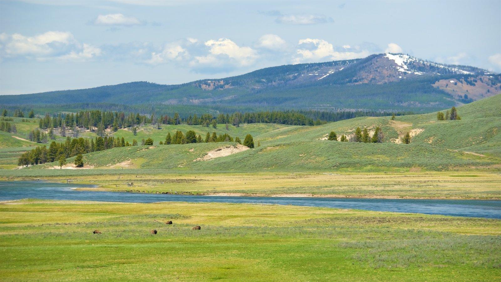 Hayden Valley que inclui animais terrestres, um rio ou córrego e cenas tranquilas
