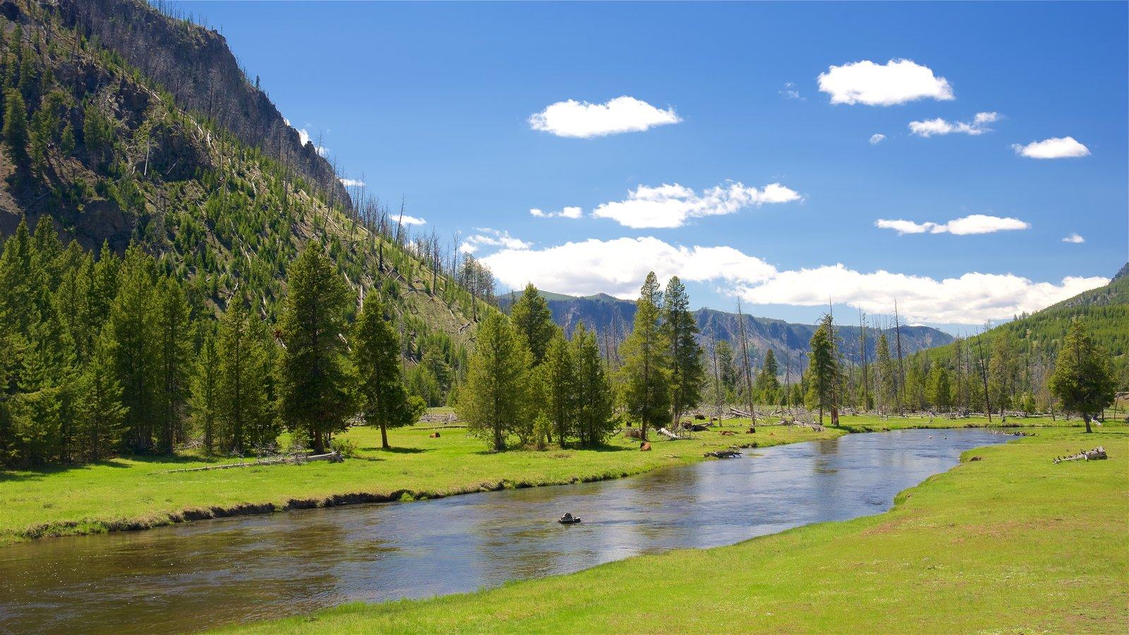 Yellowstone National Park mostrando cenas tranquilas e um rio ou córrego