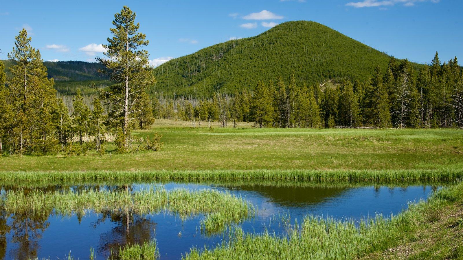 Yellowstone National Park que inclui pântano e cenas tranquilas