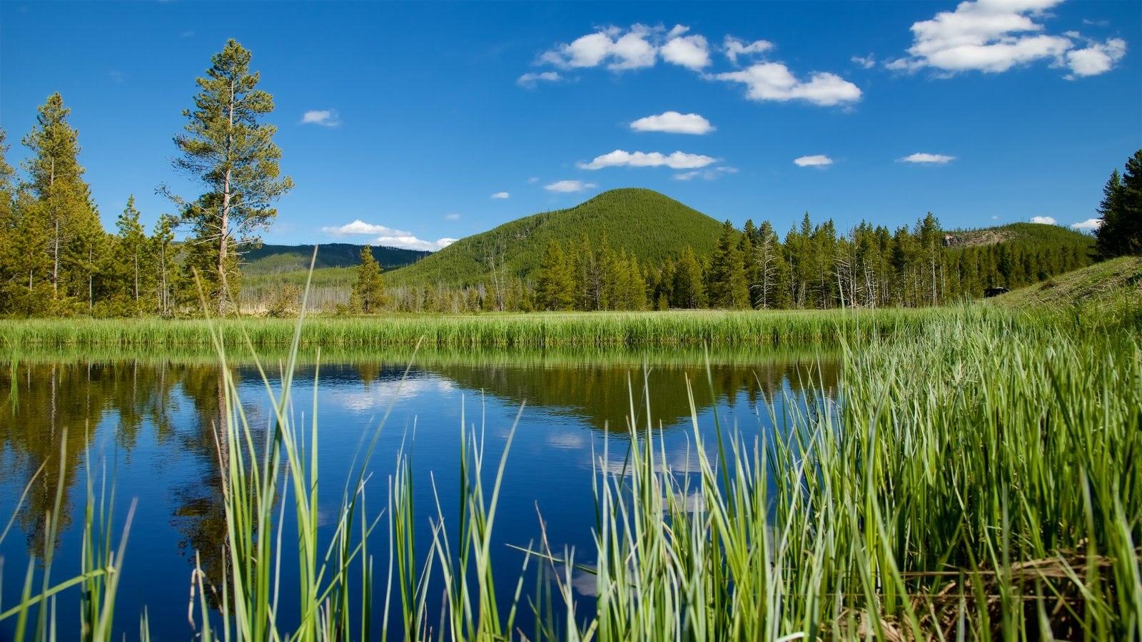 Yellowstone National Park mostrando cenas tranquilas, pântano e um lago