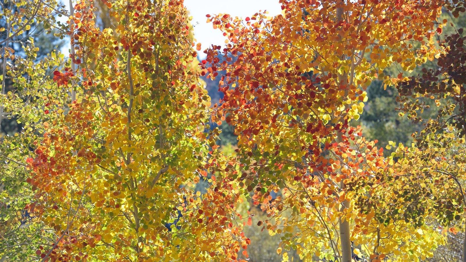 Big Bear Lake mostrando folhas de outono