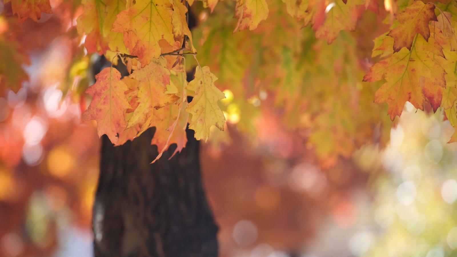 Big Bear Lake que inclui cores do outono