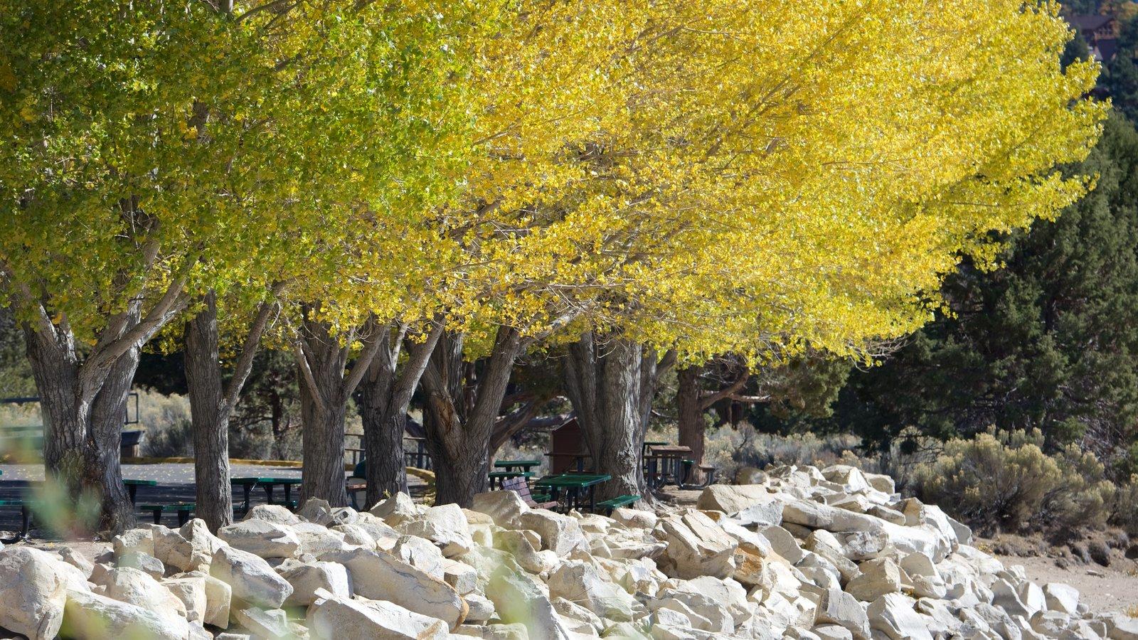 Big Bear Lake mostrando folhas de outono e um parque