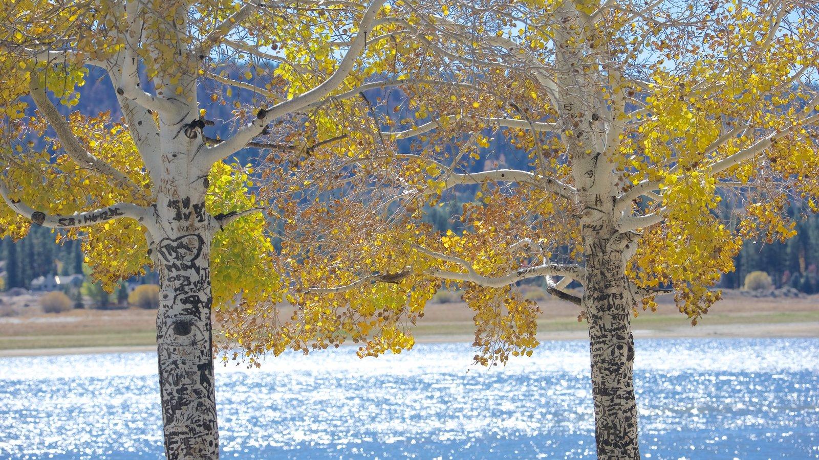 Big Bear Lake mostrando um lago ou charco e folhas de outono
