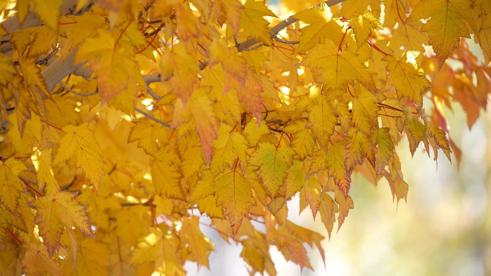 Big Bear Lake que inclui folhas de outono