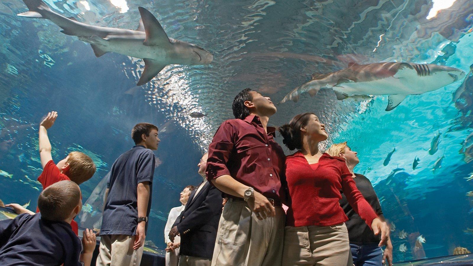 Newport Aquarium que inclui vida marinha e vistas internas assim como uma família
