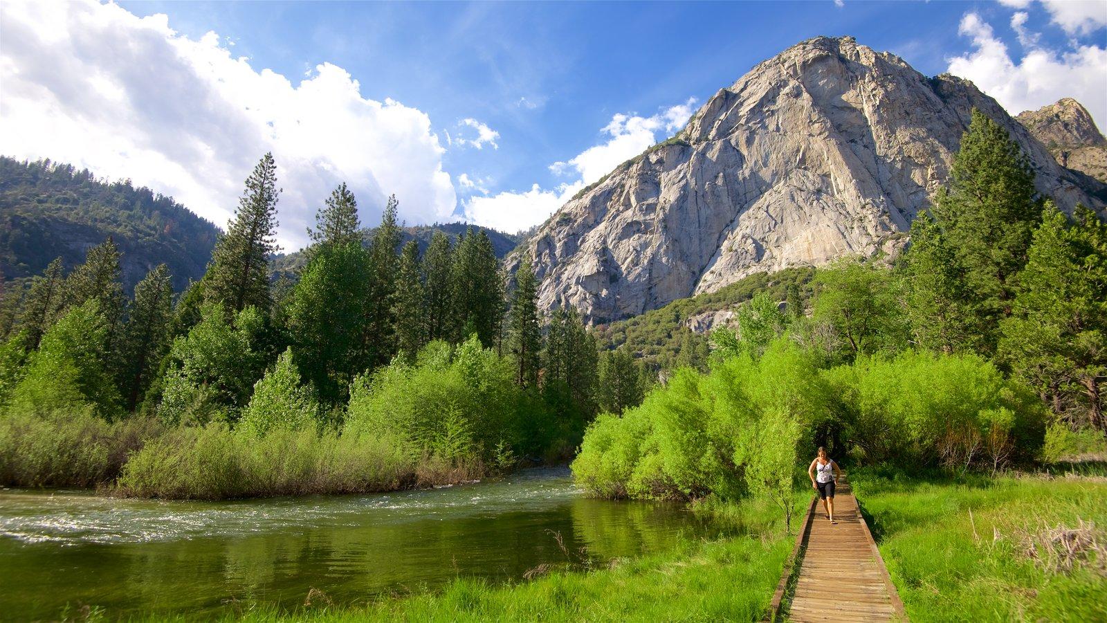 Sequoia and Kings Canyon National Parks caracterizando um rio ou córrego, uma ponte e pântano