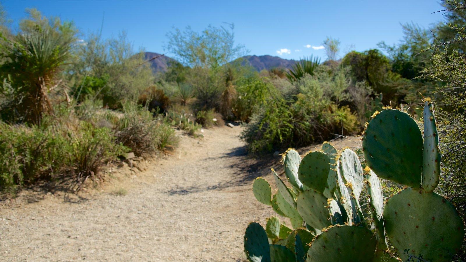 Zoológico y jardines Living Desert que incluye vistas al desierto