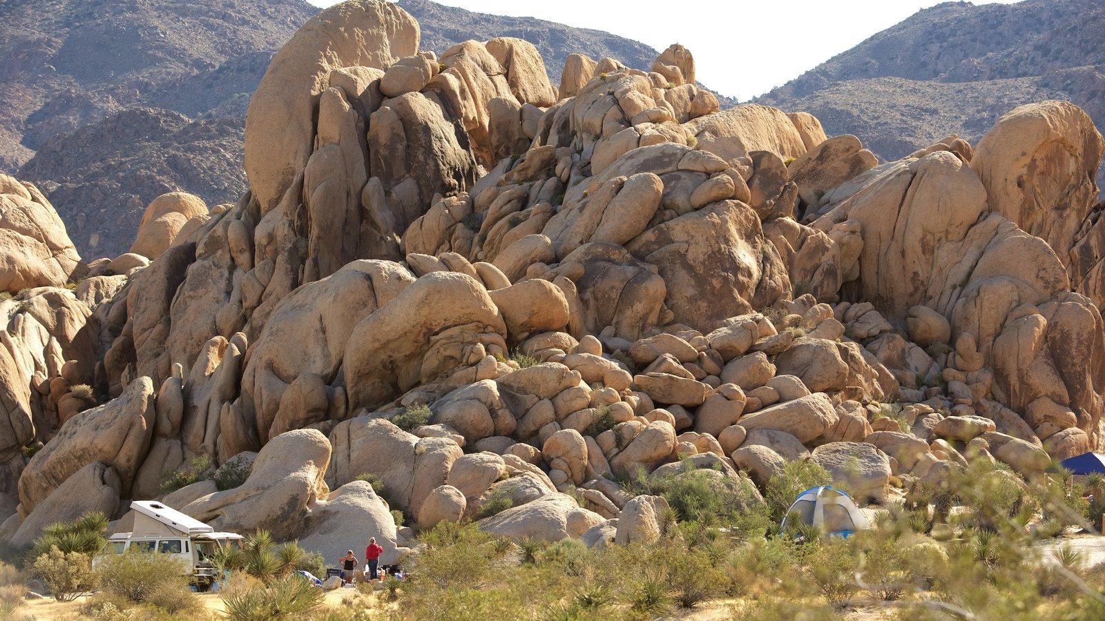 Parque Nacional de Joshua Tree que inclui acampamento e paisagens do deserto