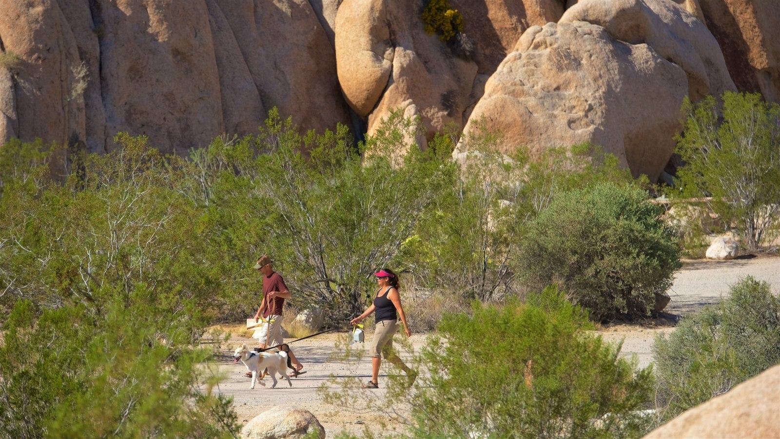 Condado de Riverside ofreciendo vistas al desierto y animales tiernos y también una pareja