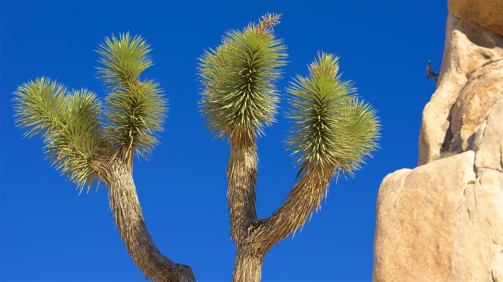 Condado de Riverside que incluye vistas al desierto