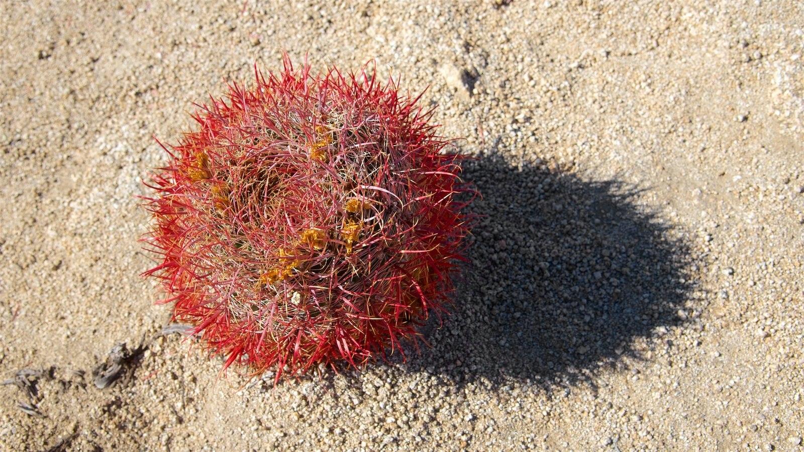 Parque Nacional de Joshua Tree que inclui paisagens do deserto