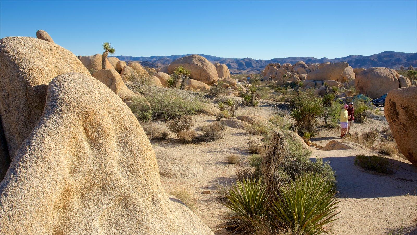 Parque Nacional de Joshua Tree caracterizando cenas tranquilas e paisagens do deserto assim como um homem sozinho