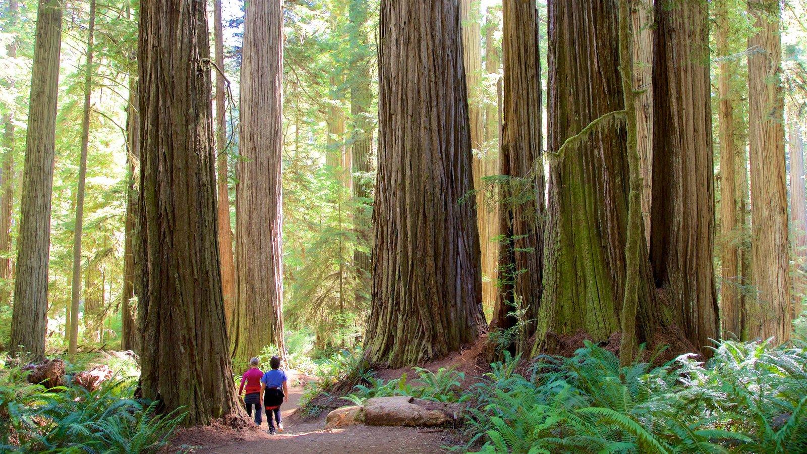 Boy Scout Tree Trail mostrando cenas de floresta e escalada ou caminhada assim como um casal