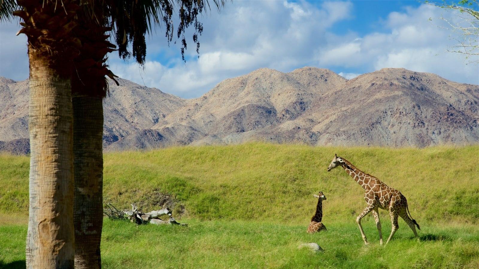 Zoológico y jardines Living Desert que incluye un parque, animales del zoológico y animales peligrosos