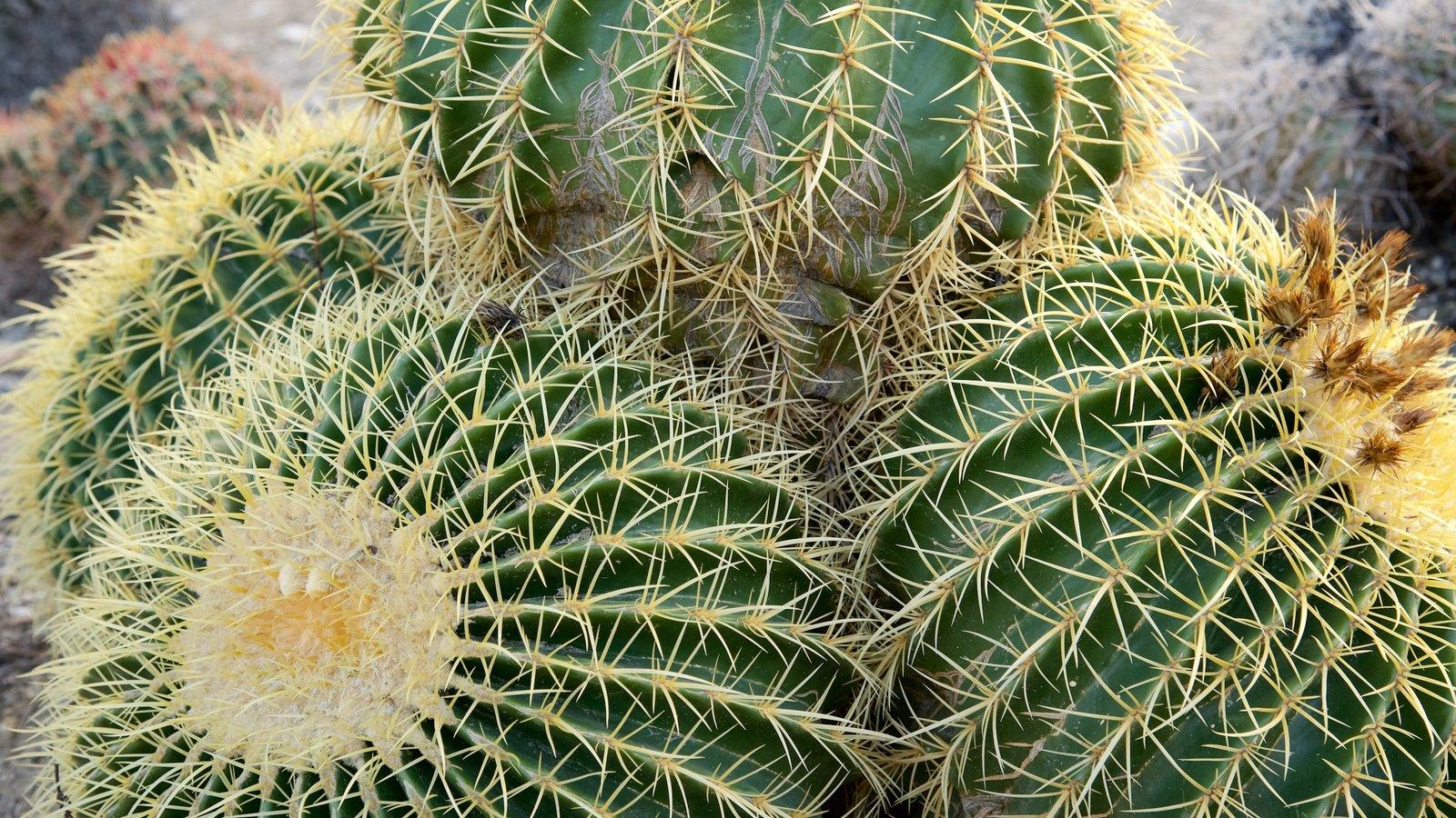 Zoológico y jardines Living Desert ofreciendo vistas al desierto y un jardín