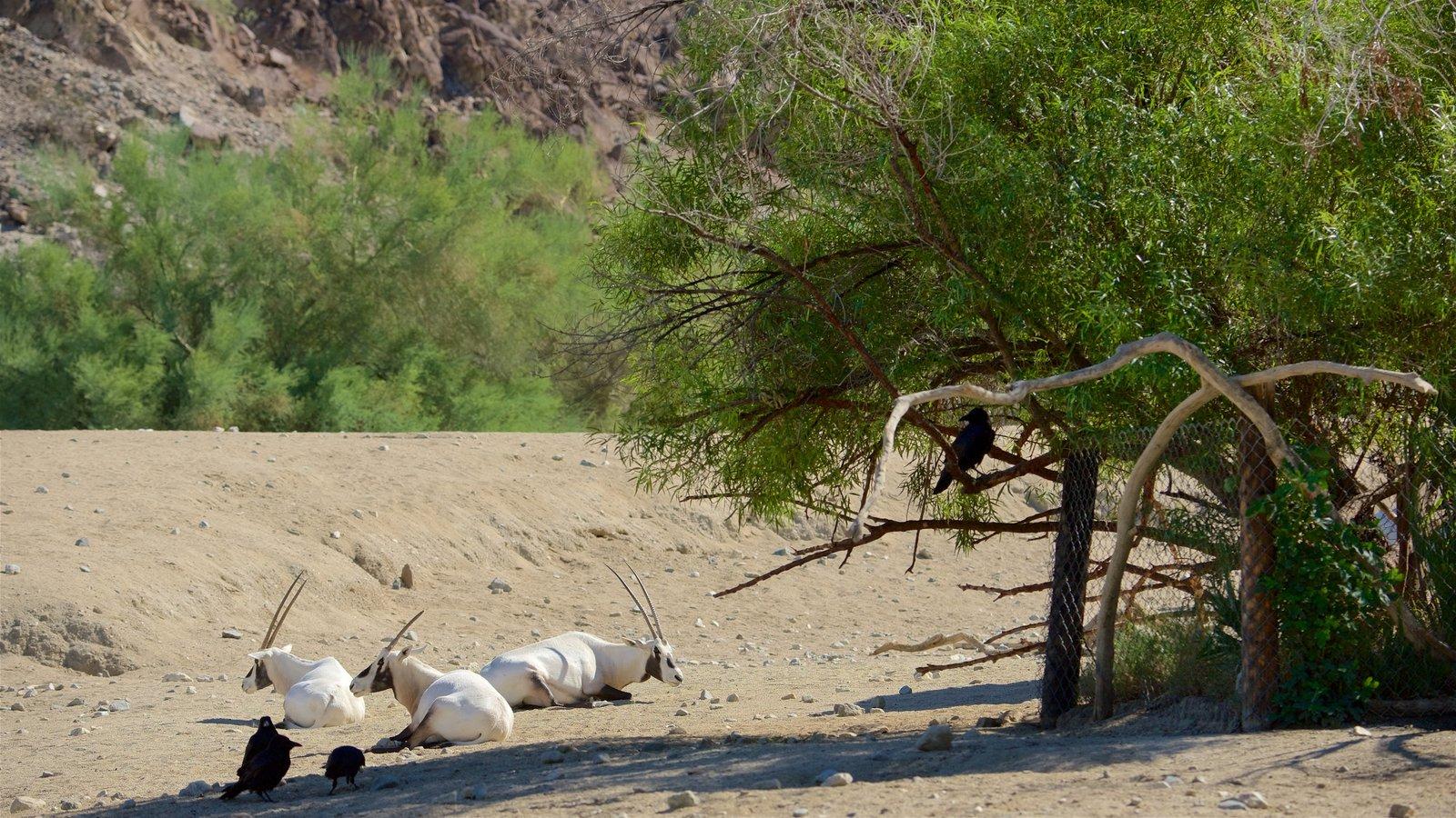 Zoológico y jardines Living Desert ofreciendo animales terrestres, vistas al desierto y animales del zoológico