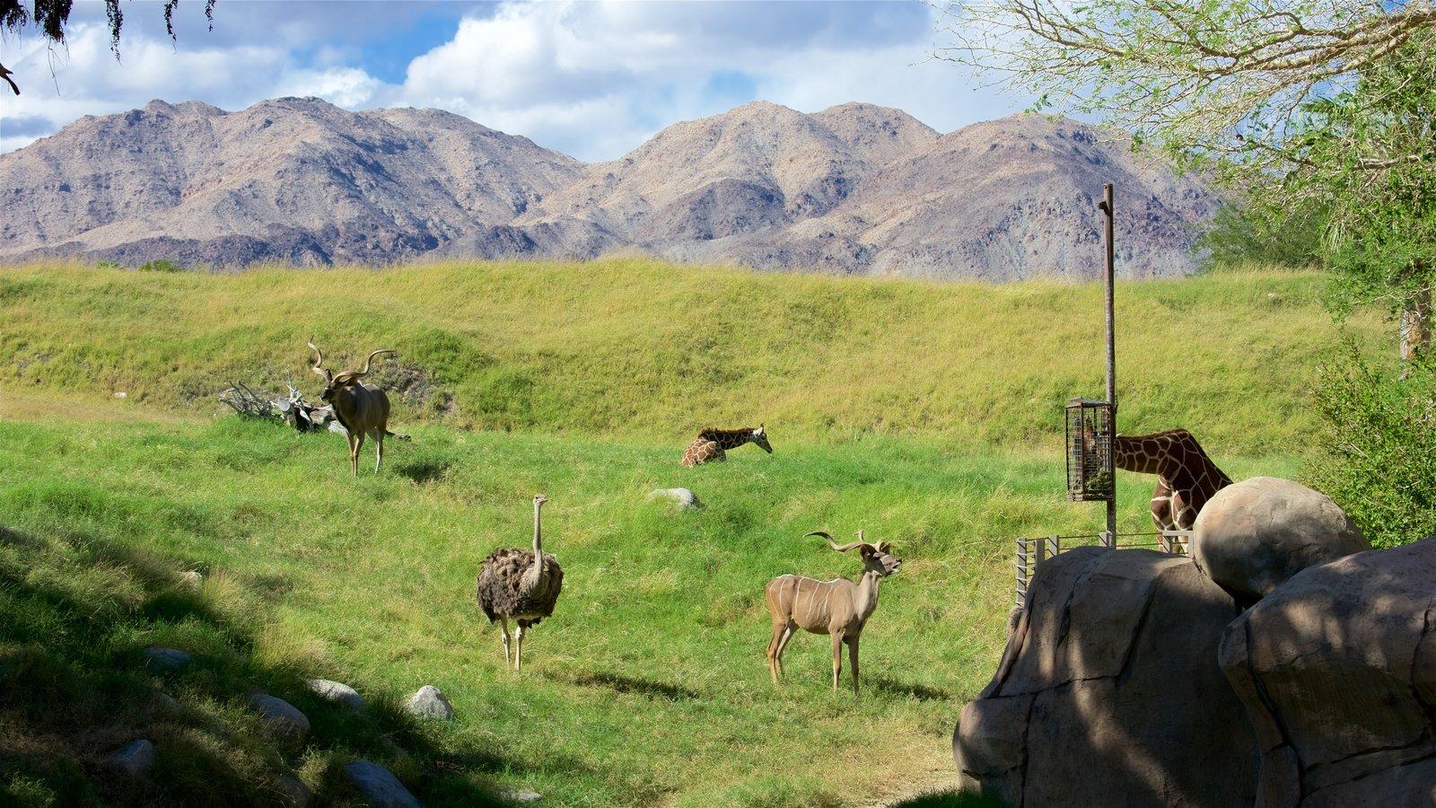 Zoológico y jardines Living Desert ofreciendo escenas tranquilas, montañas y animales terrestres