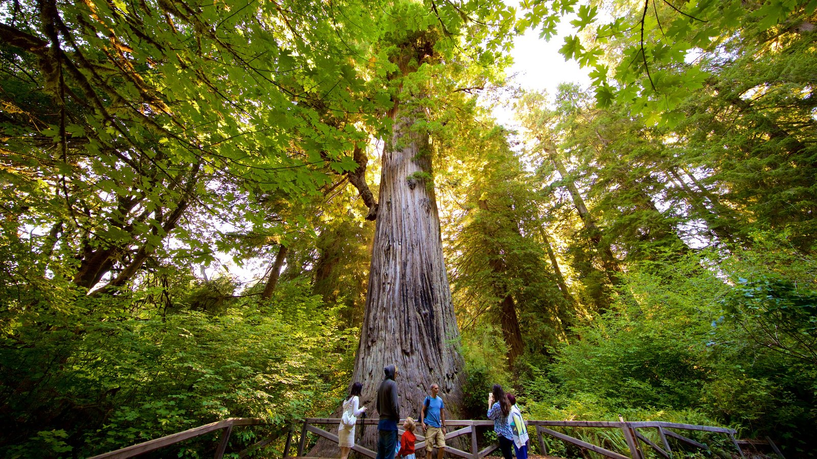 Redwood National and State Parks featuring views and forests as well as a family