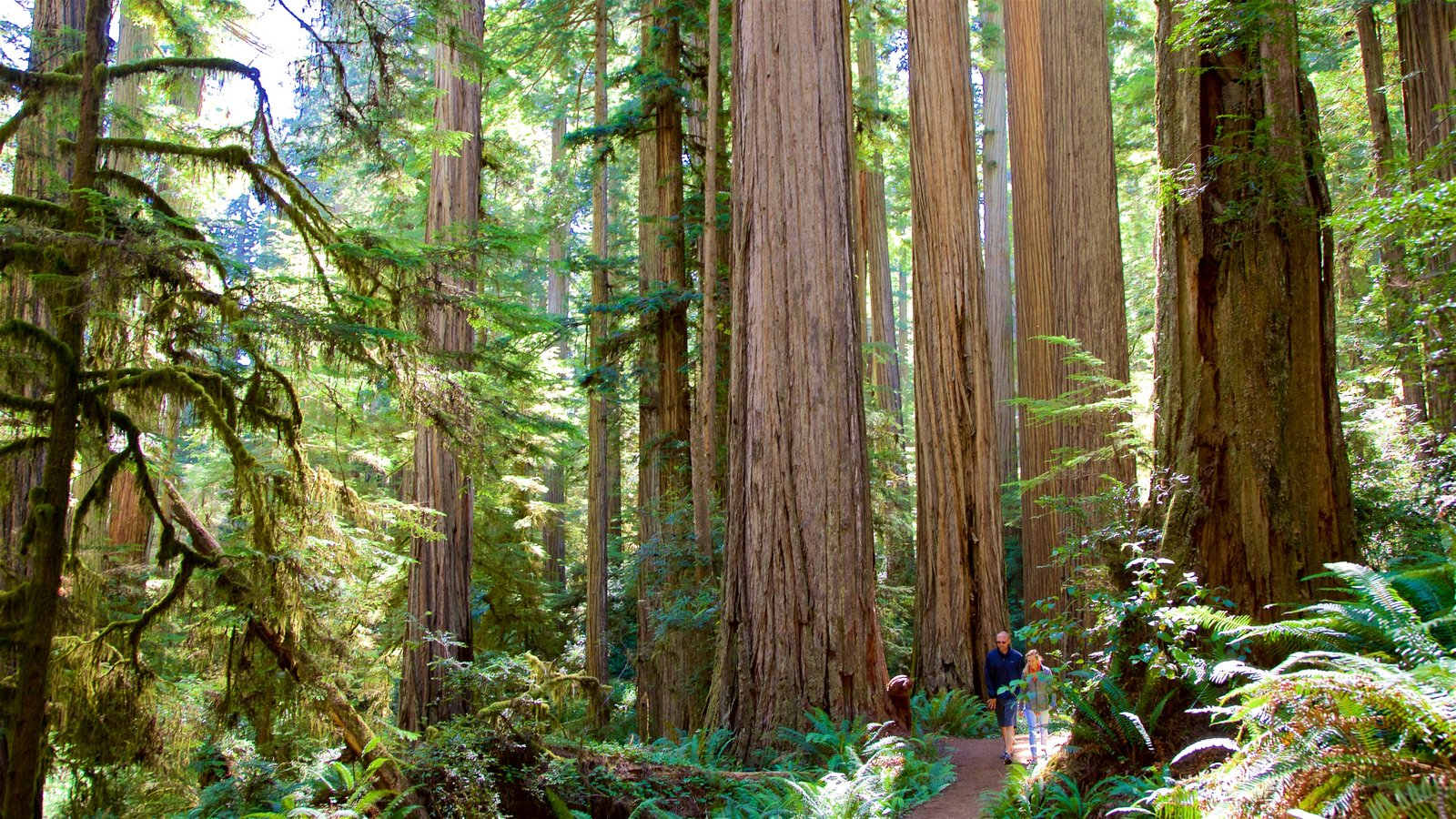 Redwood National and State Parks which includes hiking or walking and forest scenes as well as a couple