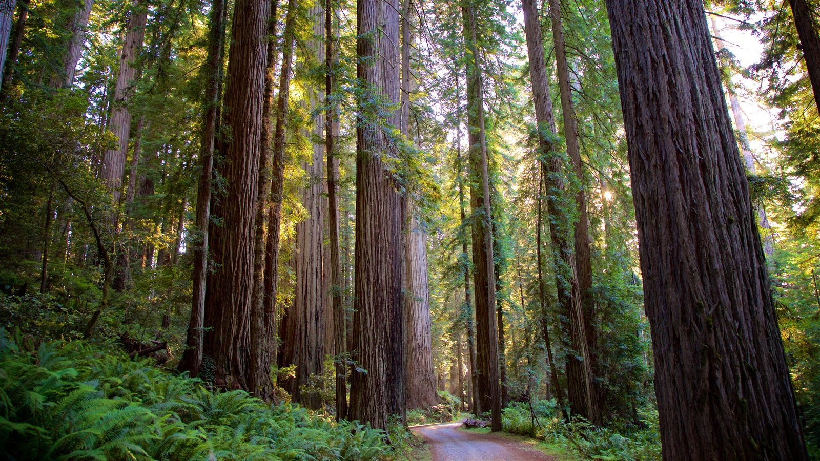 Redwood National and State Parks which includes forest scenes