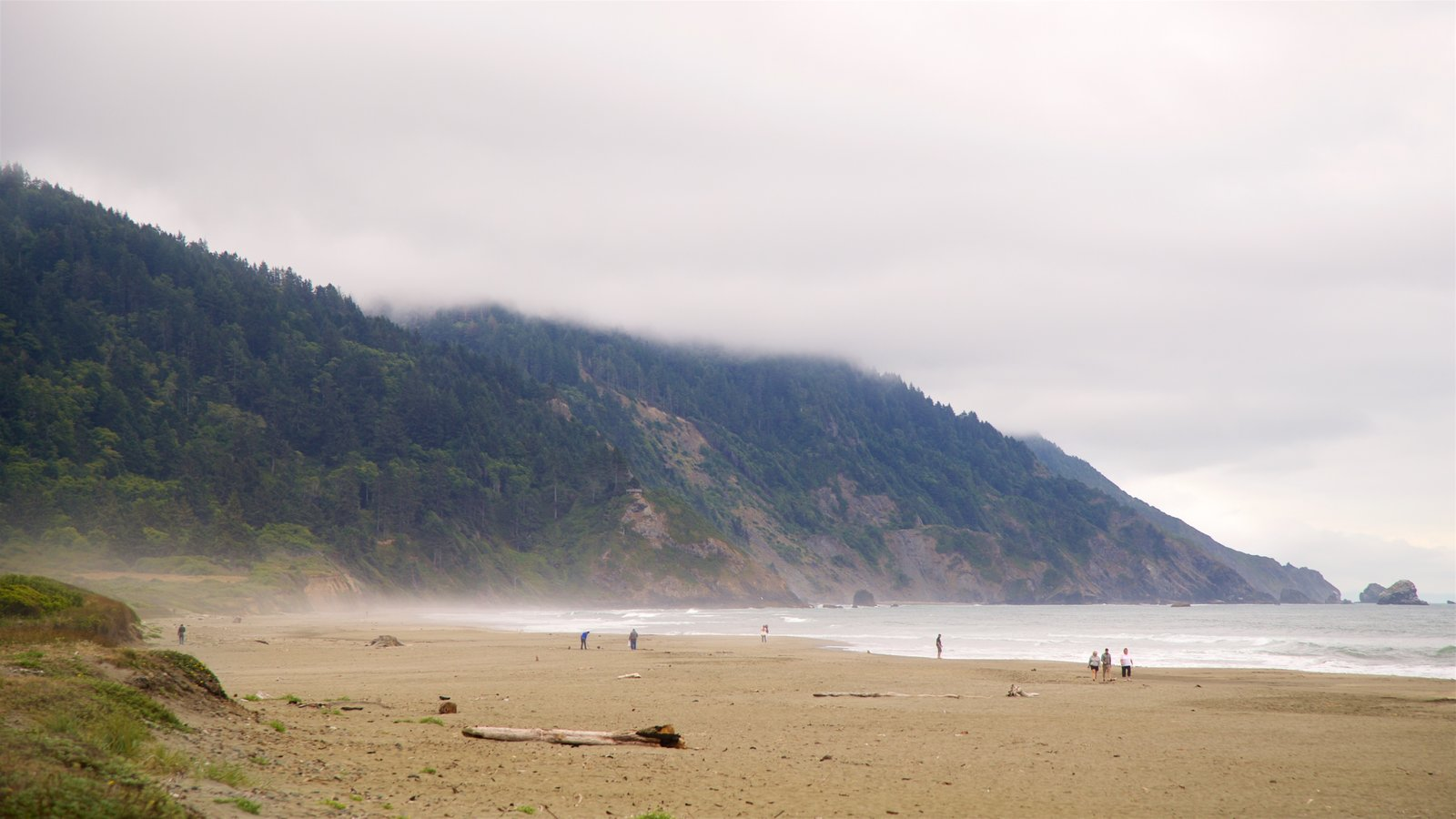 Redwood National and State Parks which includes rocky coastline, mist or fog and a sandy beach