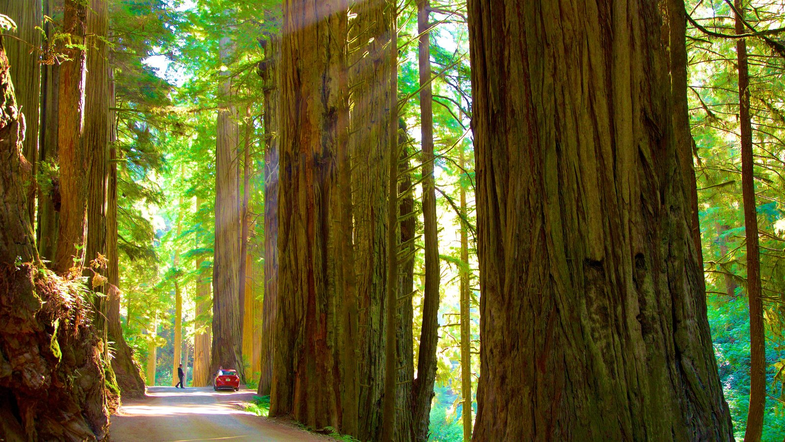 Redwood National and State Parks featuring forests