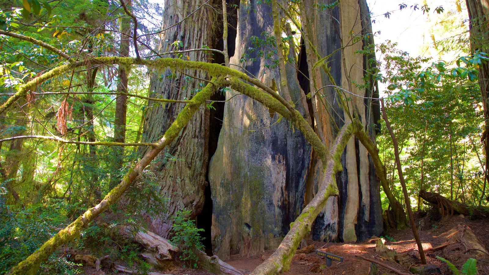 Redwood National and State Parks showing forests