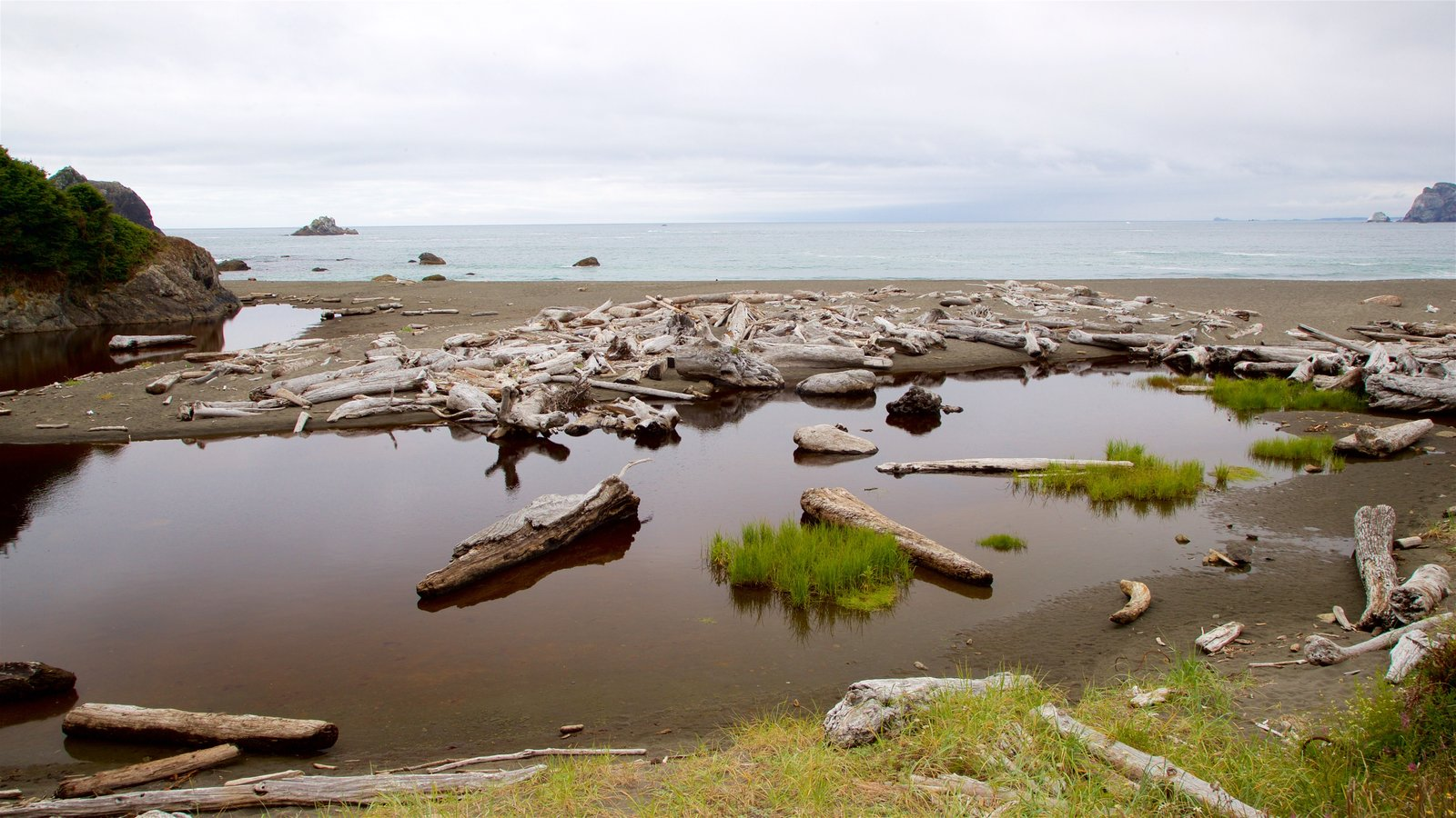 Redwood National and State Parks showing a beach and a lake or waterhole