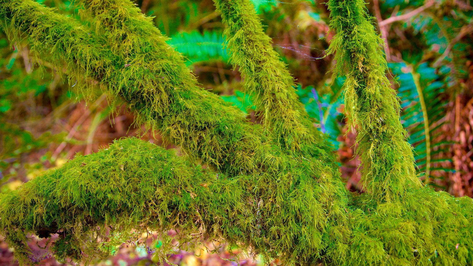 Redwood National and State Parks featuring rainforest