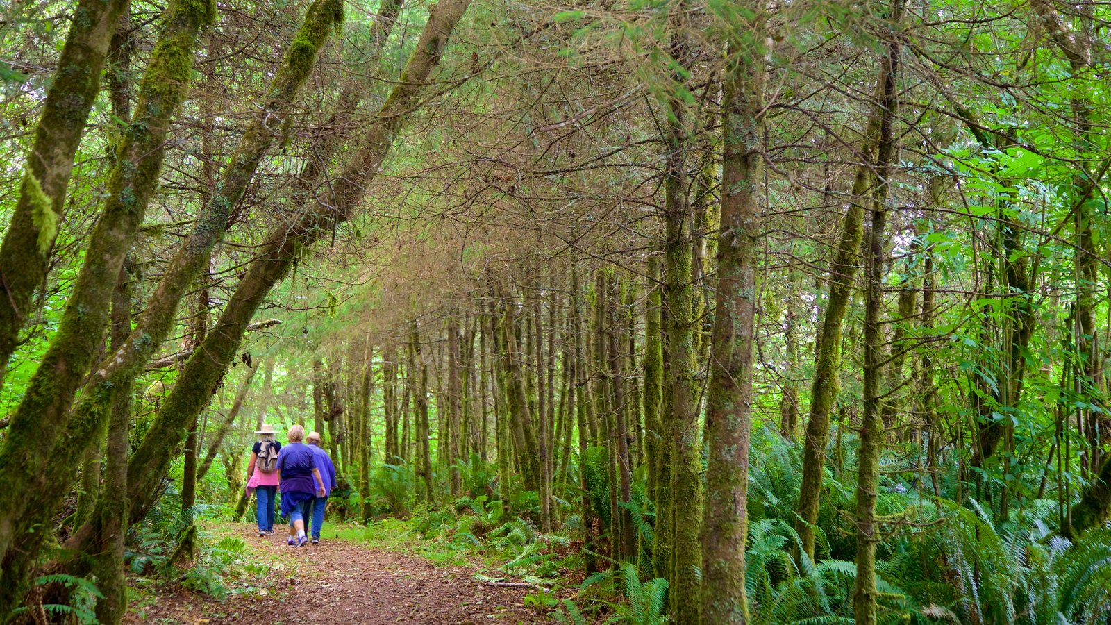 Redwood National and State Parks which includes rainforest and hiking or walking as well as a small group of people