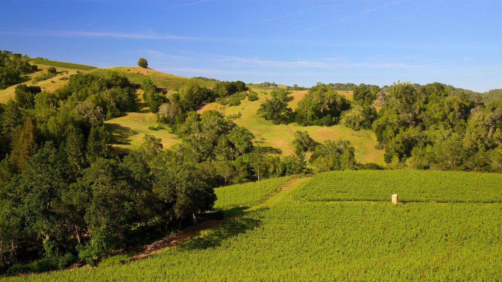 Napa Valley ofreciendo escenas tranquilas y tierras de cultivo