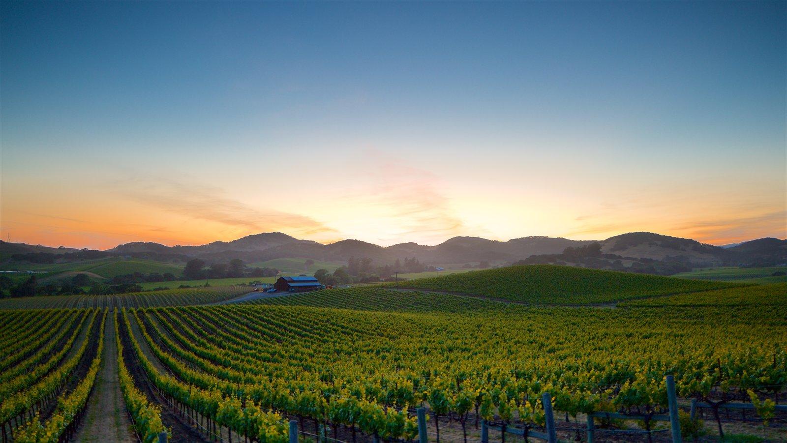Napa ofreciendo tierras de cultivo, vistas de paisajes y una puesta de sol