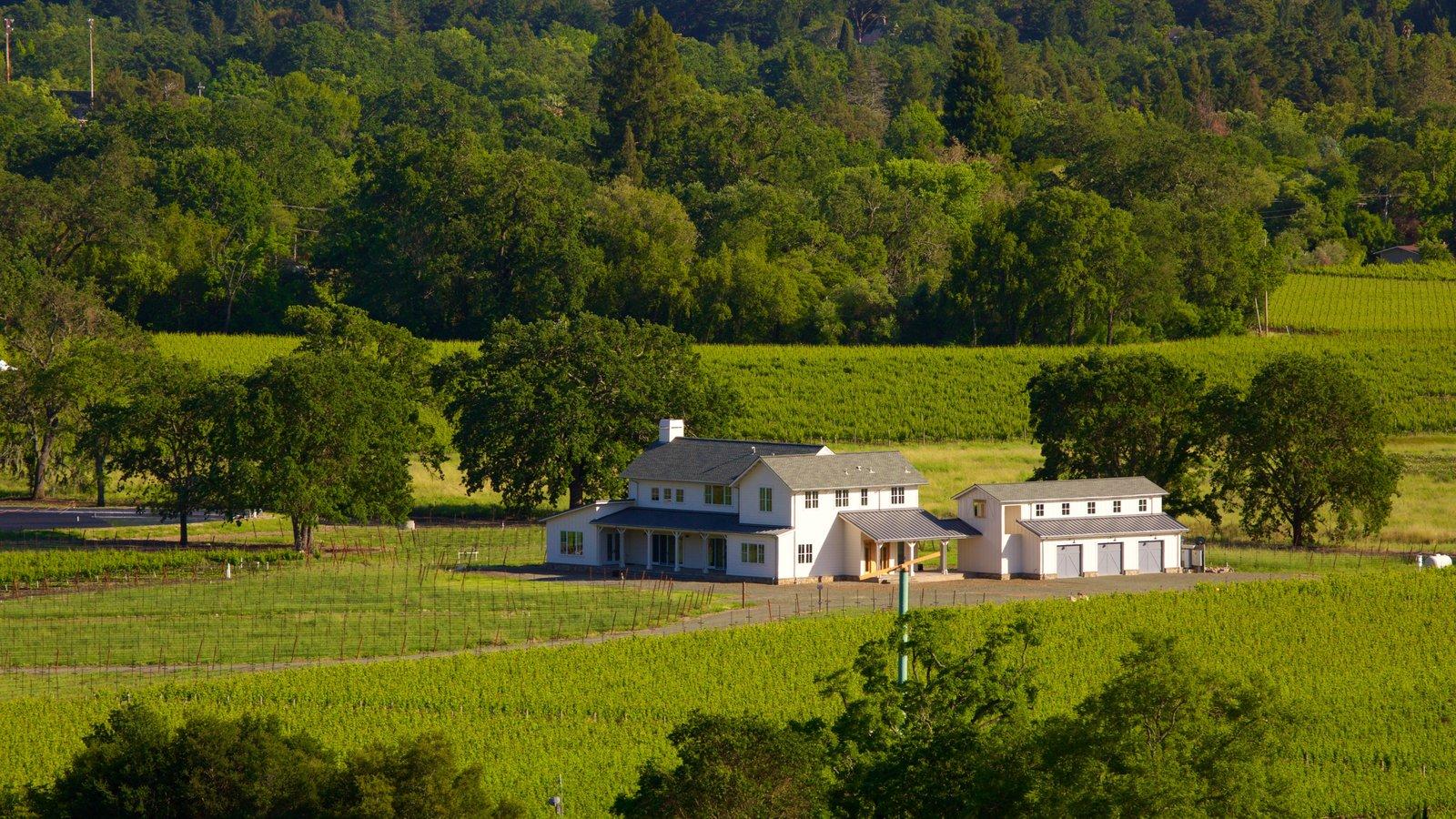 Napa Valley que incluye escenas tranquilas, tierras de cultivo y una casa
