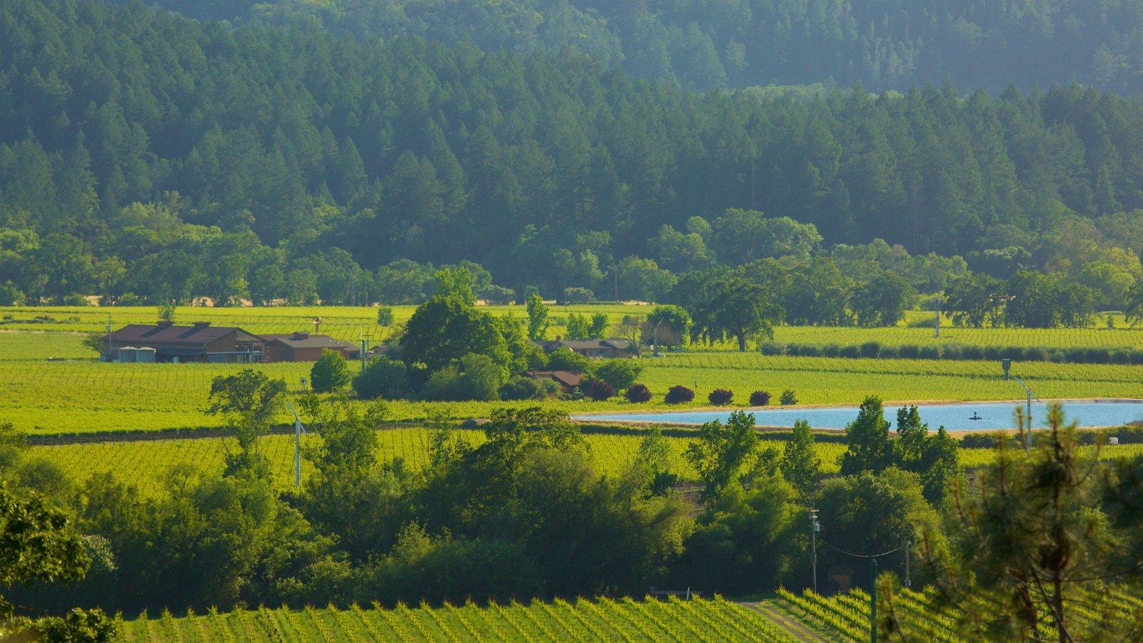 Napa Valley ofreciendo escenas tranquilas, tierras de cultivo y un lago o abrevadero