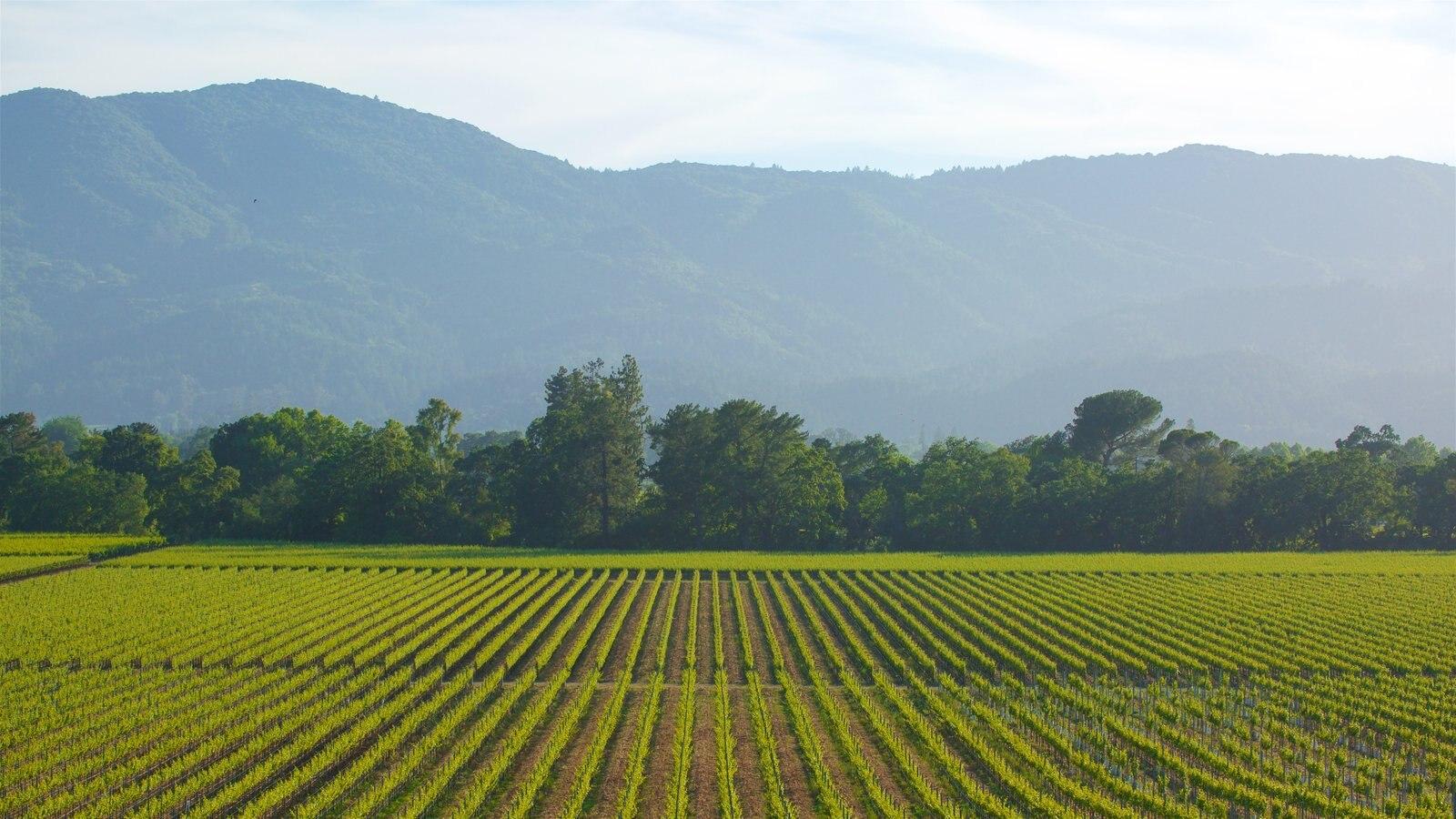 Napa Valley ofreciendo tierras de cultivo, escenas tranquilas y vistas de paisajes