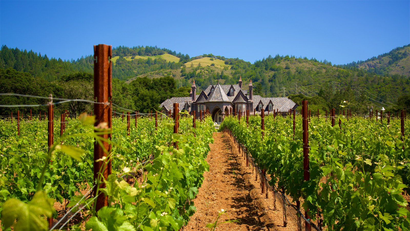 Ledson Winery and Vineyards featuring farmland, tranquil scenes and heritage elements