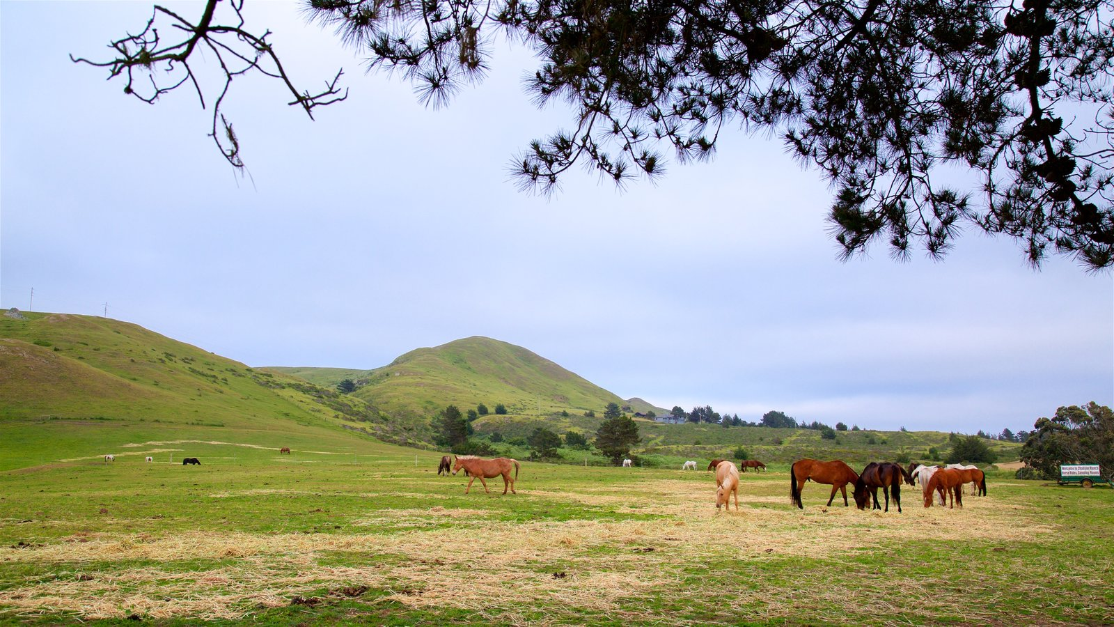 Sonoma Valley showing tranquil scenes and land animals