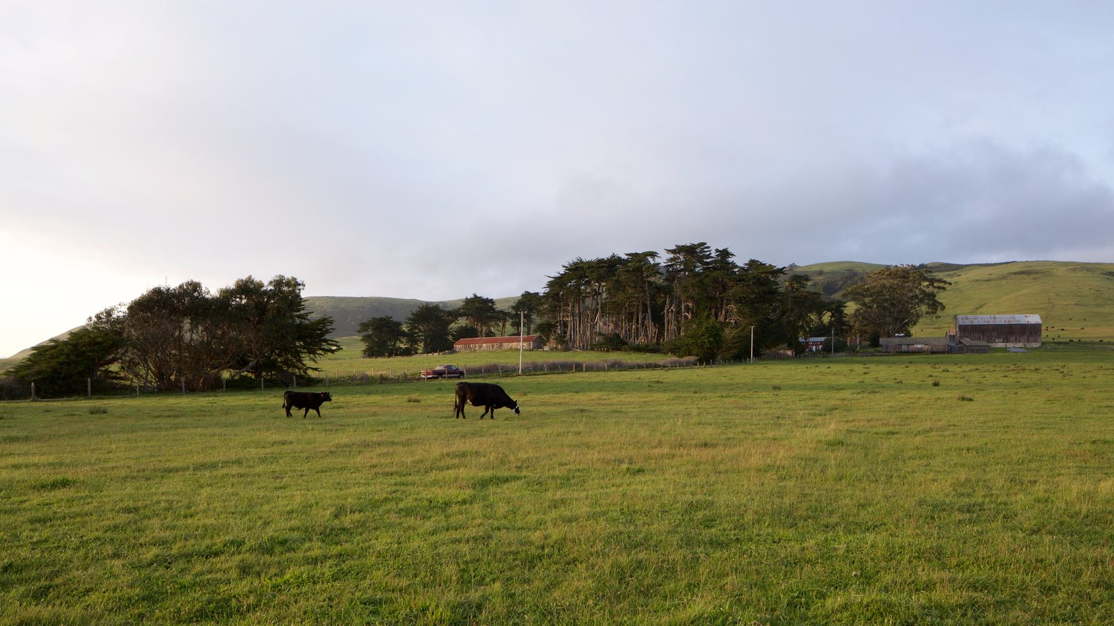 Sonoma Valley featuring tranquil scenes, land animals and a sunset