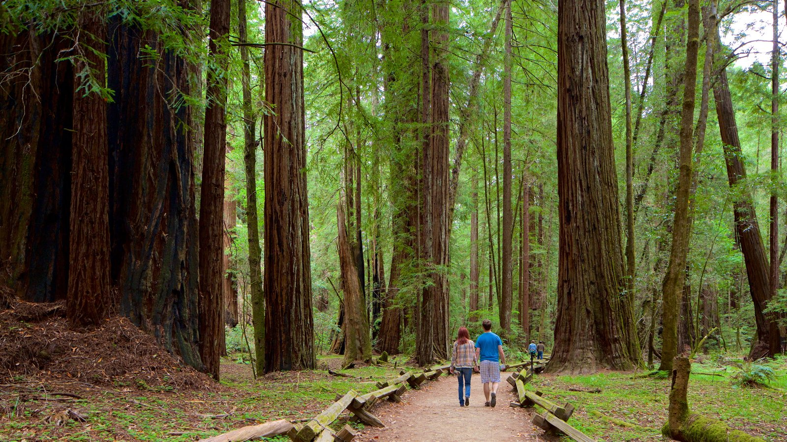 Armstrong Redwoods State Park showing forests as well as a couple