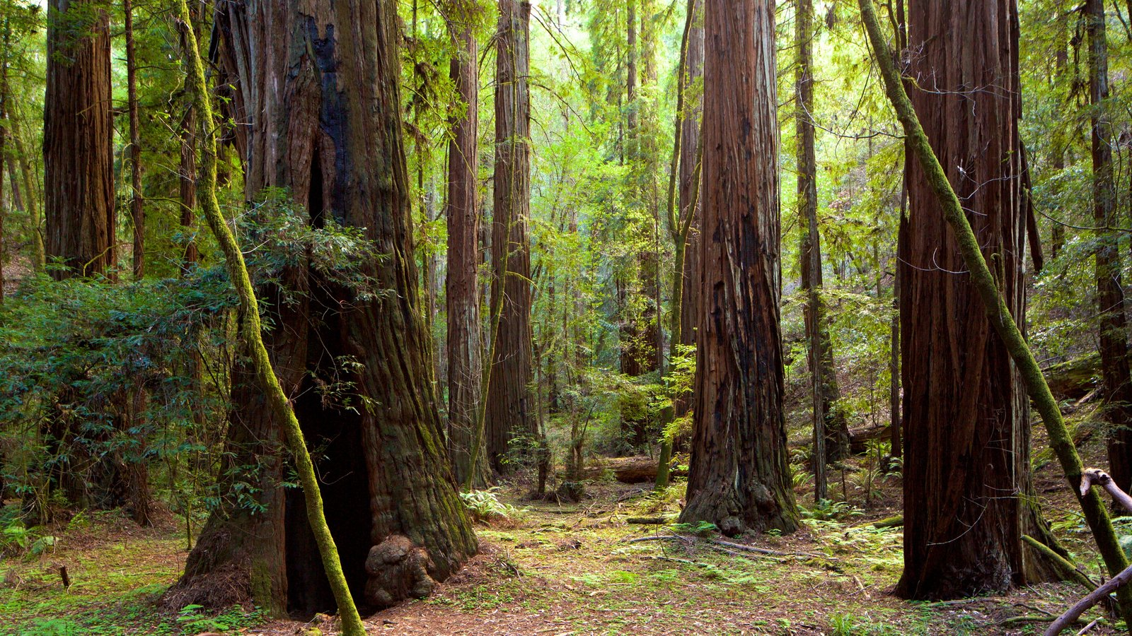 Armstrong Redwoods State Park which includes forests