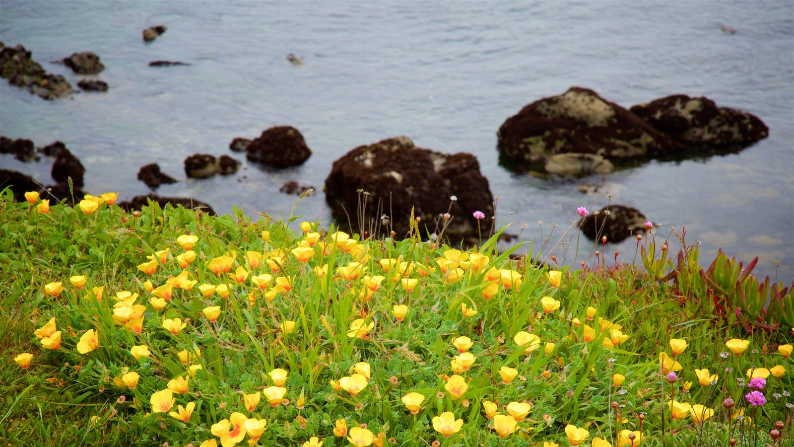 Mendocino Coast Botanical Gardens Which Includes General Coastal Views And  Wildflowers
